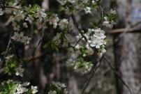 Besonders im Frühling, wenn alles blüht, lohnt sich eine Wanderung