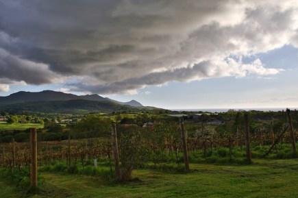 "Blick über das Weingut ""Pant Du Vineyard"" in Wales"