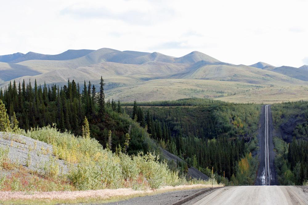 Der Dempster Highway im Yukon. Hinter der Rechtskurve am Horizont sollte ich auf meine ersten Bären stoßen