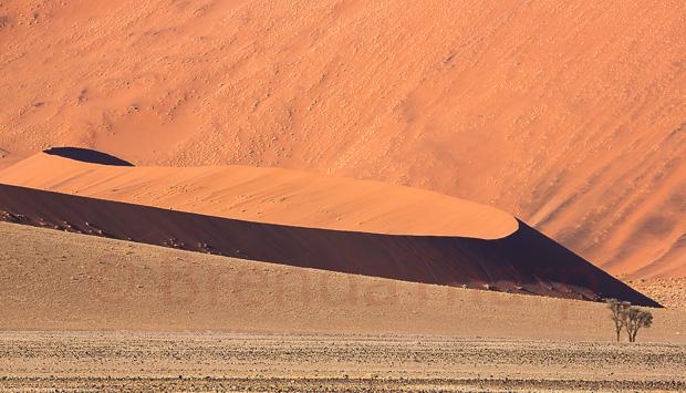 Dune Detail, Namibia