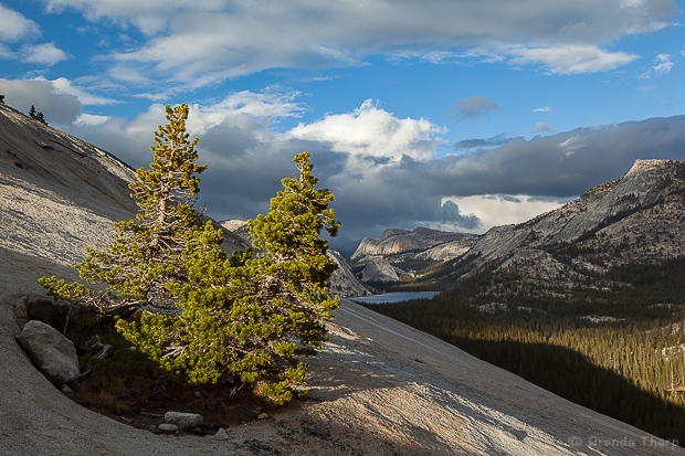 clouds, Fall, granite, jeffrey pine, landscape, mountains, national, Olmsted, pine, pinus jeffreyii, Point, range, rock, seasons, Sierra, sierra nevada, survival, trees, USA < North America < Places, Yosemite National Park < california, Yosemite NP