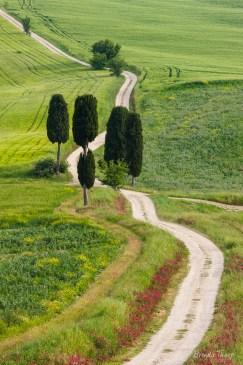 Springtime landscape in Tuscany, Italy.