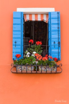 Pretty Window and Flowers.