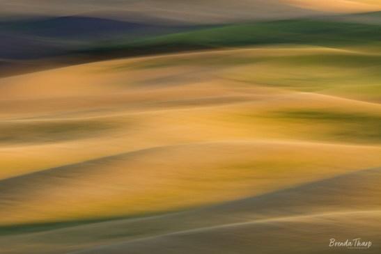 Panned blur of golden fields, Washington.