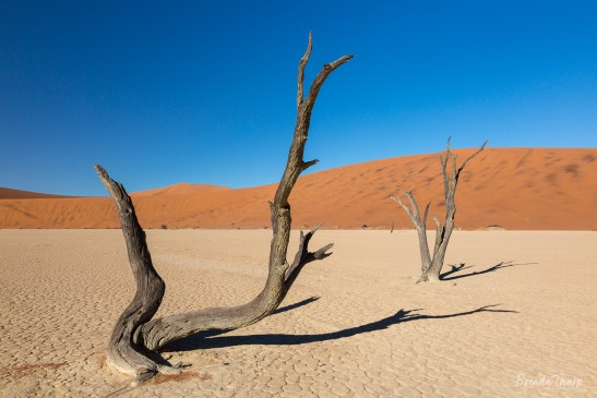 Ancient Trees, Ancient Lakebed