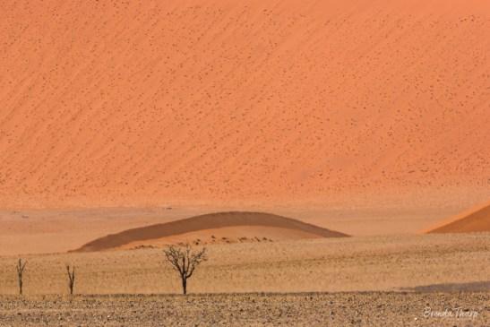 Heat waves across the desert and dunes.