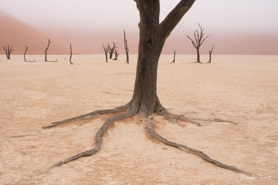 Roots of dead acacia tree in Deadvlei, Namibia.