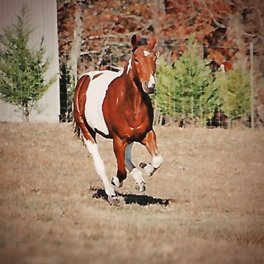 Horse running, Paint Horse, Running From Temptation, blog post, devotional, Brenda W. Powell