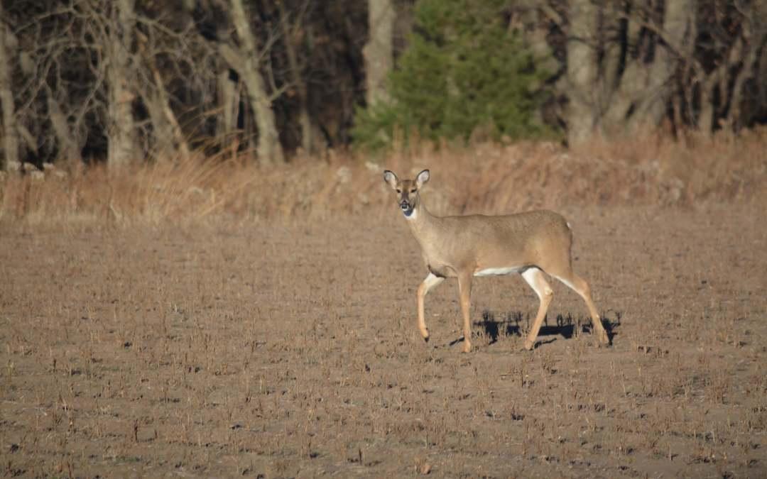 Deer season off to good start