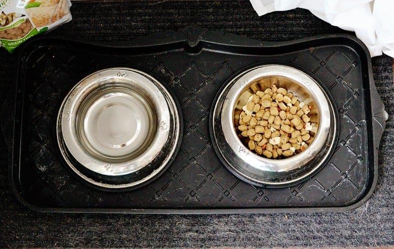 dog-training-tips-siberian-husky-freshpet-4