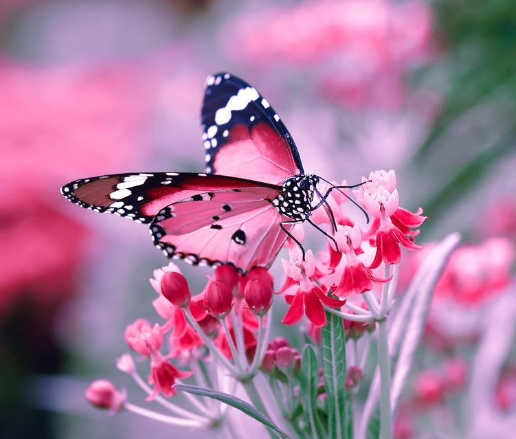 aquarium et jardins aux papillons de vannes bretagne com
