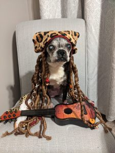 Rock Your Pet Like Bret Contest - Daisy