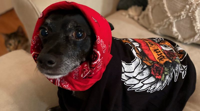 Rock Your Pet Like Bret Contest - Diego (Feature Image)