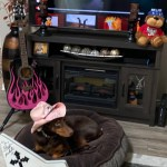 Rock Your Pet Like Bret Contest - Lynn