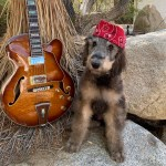Rock Your Pet Like Bret Contest - MalMoo