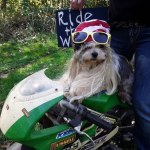 Rock Your Pet Like Bret Contest - Tootsie