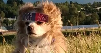 Rock Your Pet Like Bret Contest - Twinkie