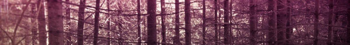cropped-1-Foresta-Nera-interno.jpg