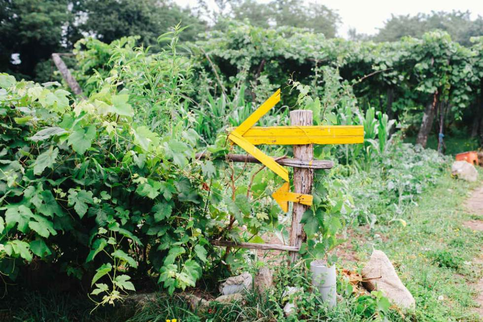 A yellow arrow pointing left on a wooden post, surrounded by green vines.