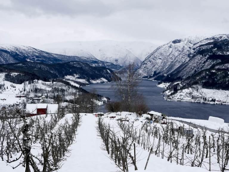 Scenery from Kveik Bryghus, in Ulvik, Hardanger, Norway