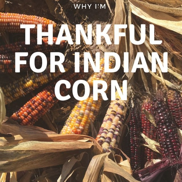httpswwwbrewingwisdomcom20171102thankfulindiancorn indiancorn thanksgiving