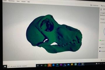 3D-Scan eines Affenschädels