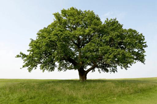 Organic Tree Fertilization
