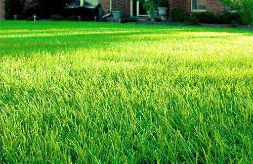Lawn Care vs. Lawn Service