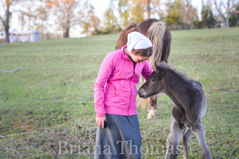 The first foal of 2017, Halal's Smoky Mountain Man, made his debut on April 4th. Rocky Mountain Man x Kilburn's Sundown Molley x Kilburn's Chocolate Sundown