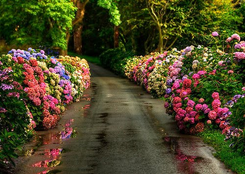 Forest Lane, Yorkshire, England