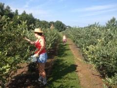 Karen Picking Berries