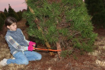 Katie Beth cutting Christmas tree