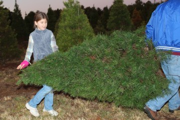Katie Beth hauling Christmas tree