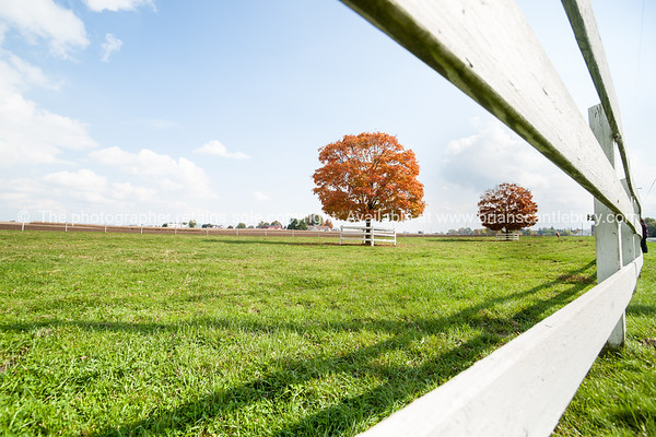 Gannet Colony on large canvas, 1200 X 840mm approx.To order or see original image; http://www.brianscantlebury.com/Animals/Birds/7592839_dP6cXR#!i=3061628978