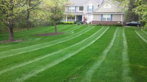 Brian's Service Landscaping, Mowing, Snow Removal 01B iImage