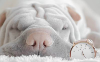 Prezzi scontati per cuscini per cani - shar pei photo