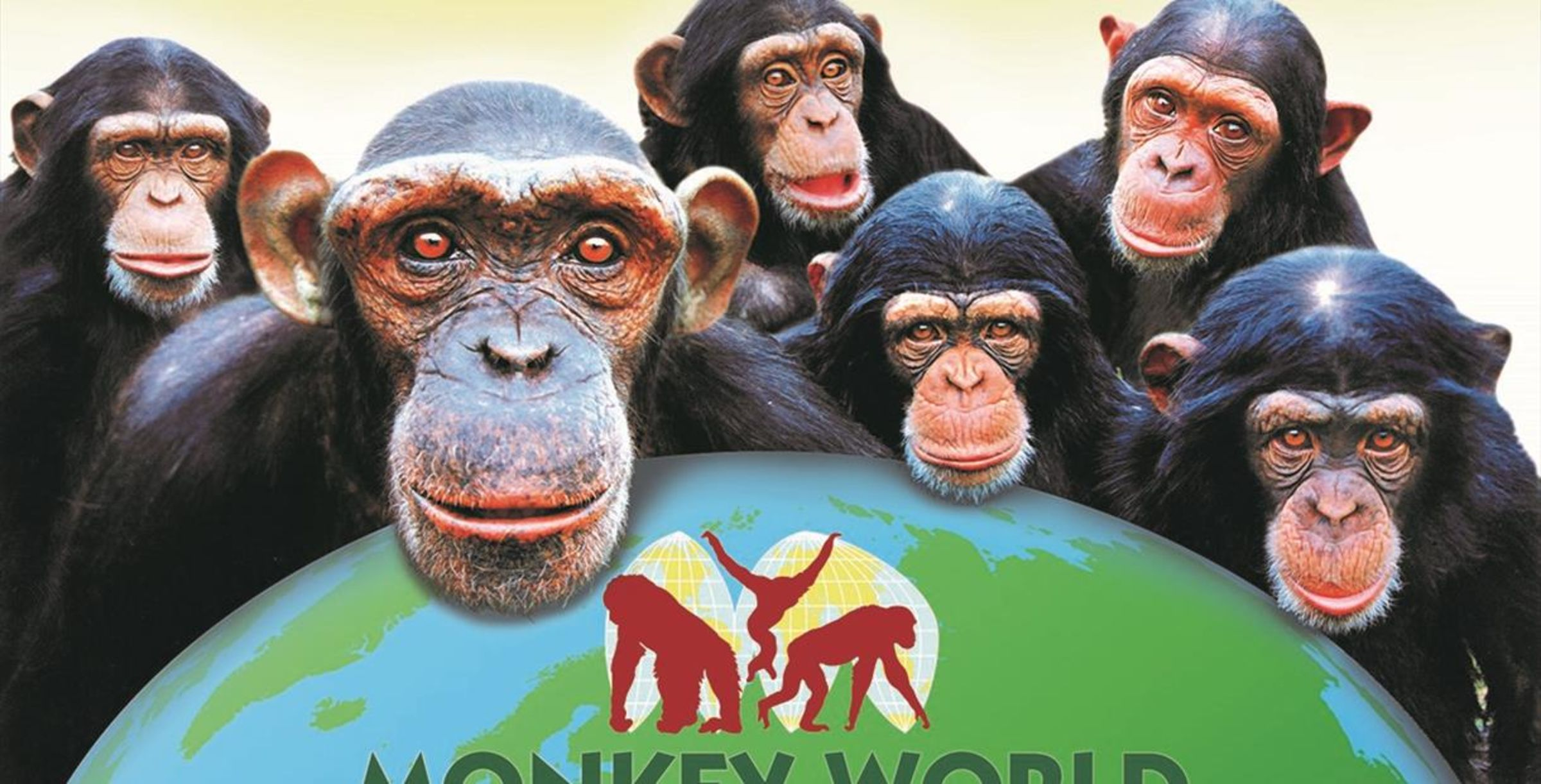 Win 2 Monkey World Tickets Plus A VIP Tour