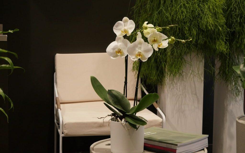 Comment réalisez vos propres vases?