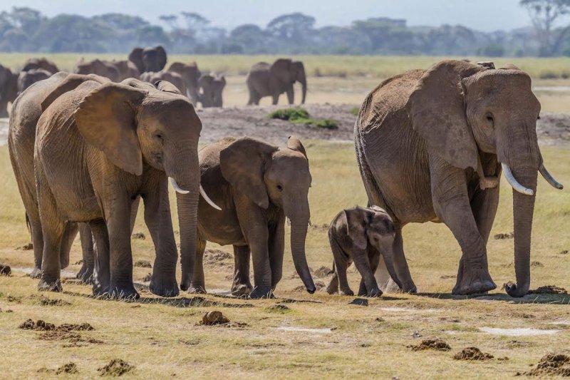 eco resorts kenyan Eco-Friendly Honeymoon