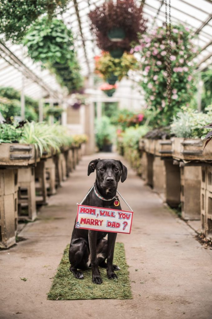 Our Top Ten Ideas for Making a Great Proposal | British wedding blog - Bride and Tonic