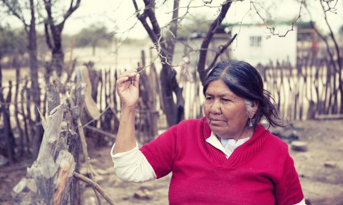Wichi woman shows us their berry tree
