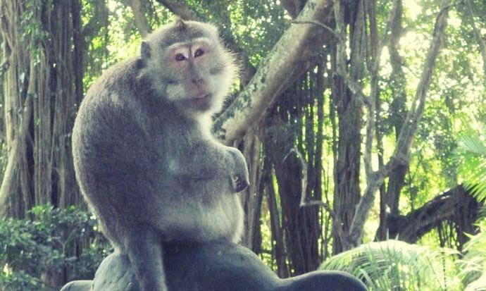 Monkey in monkey forest Ubud