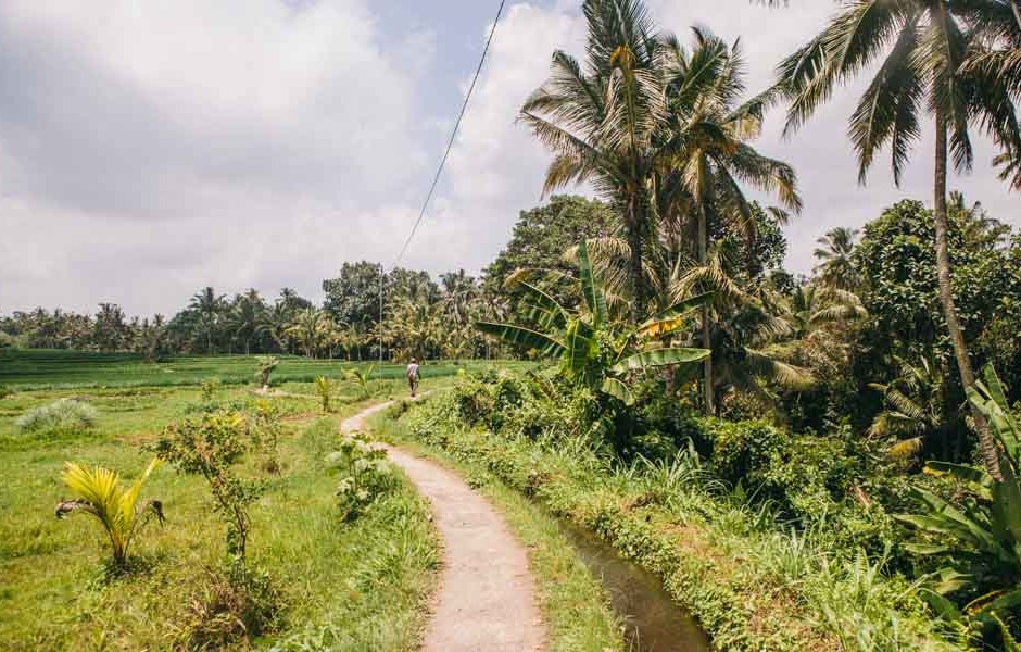Ubud travel guide and tips