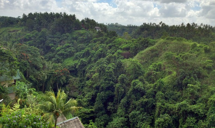 View from Indus Ubud