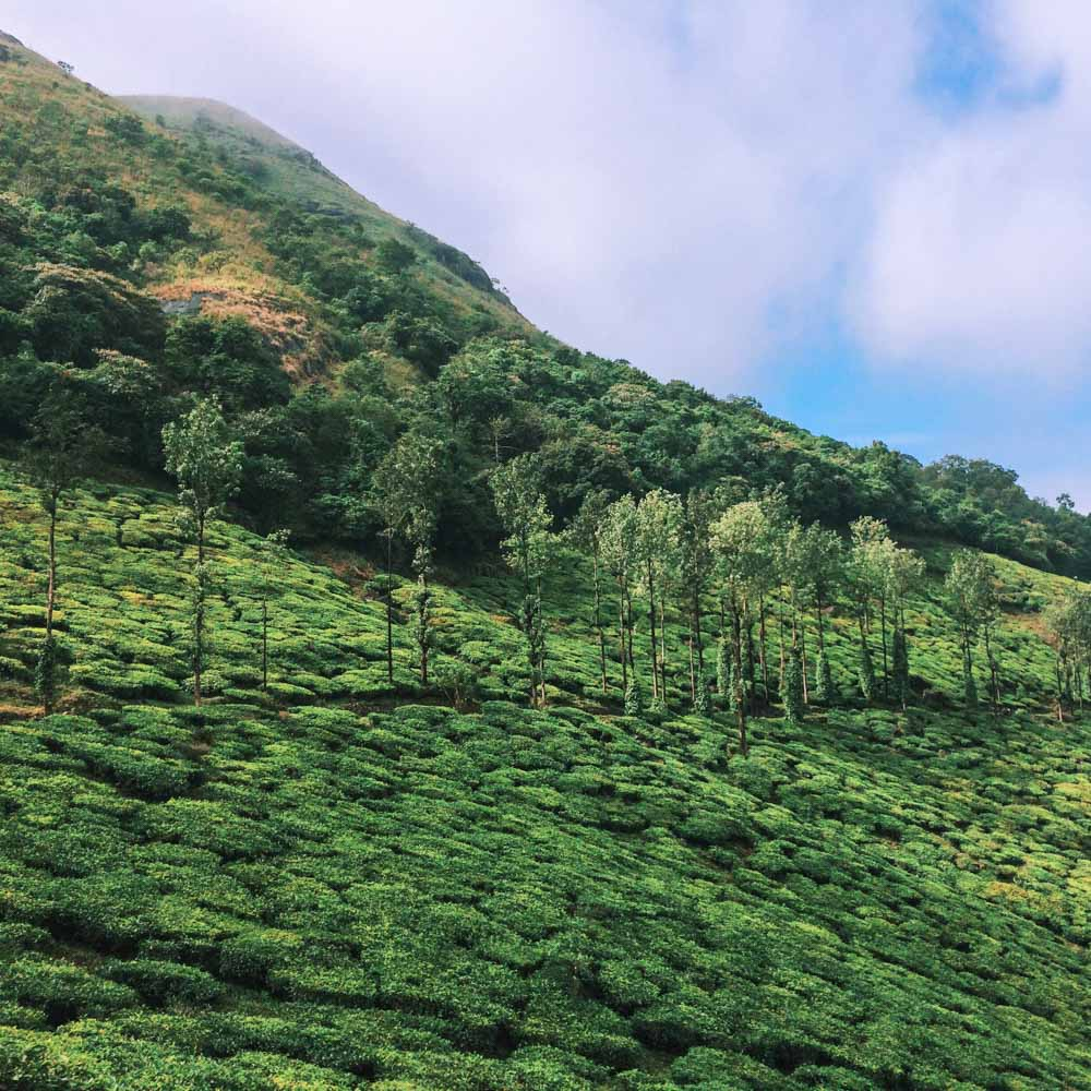 Consider Wayanad for your Kerala itinerary