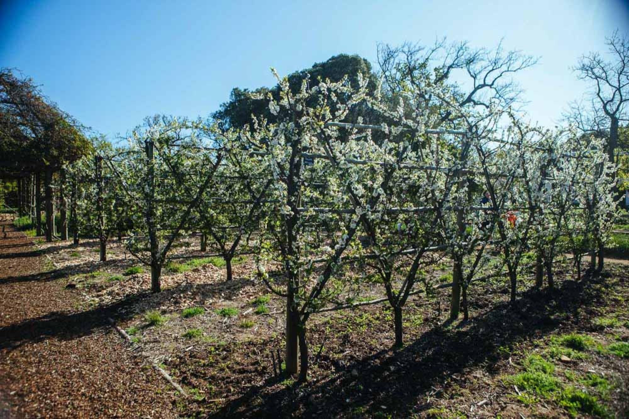 Vineyard farm stay in Cape Winelands