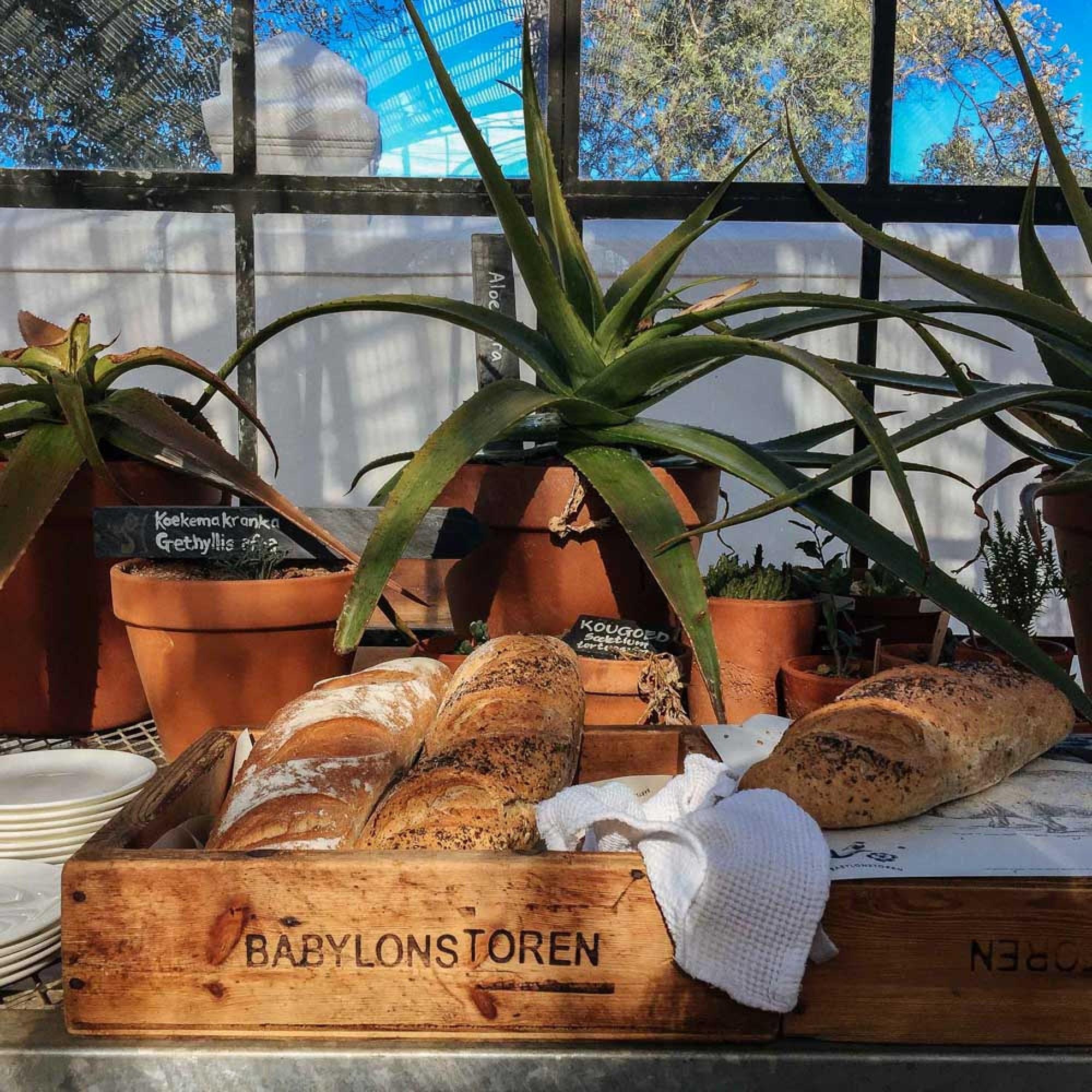 Breakfast at Babylonstoren
