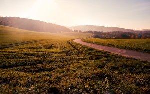 field, grass, winding road