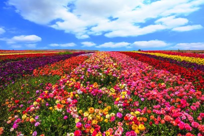 tl_oct16_south_israel_flowers