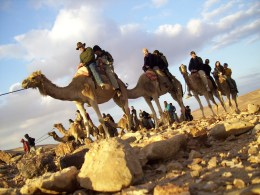 The Bedouins livelihood depends on sheep, goats, and camels.